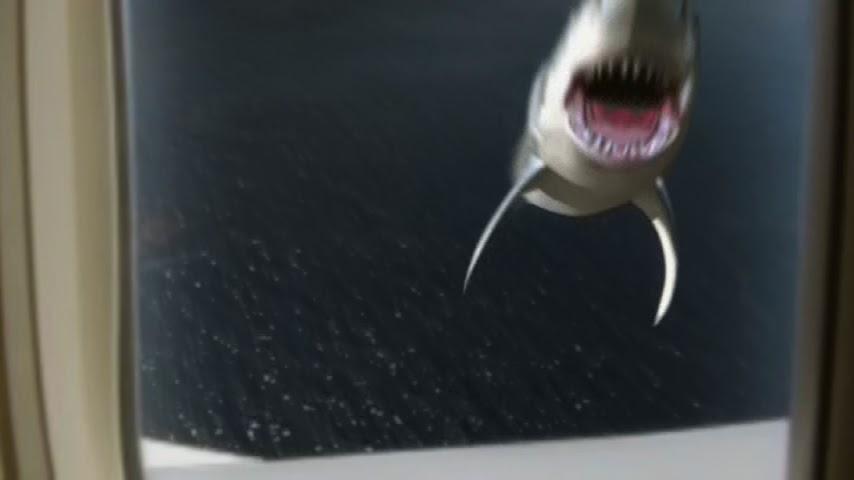 Shark attacks plane - photo#19