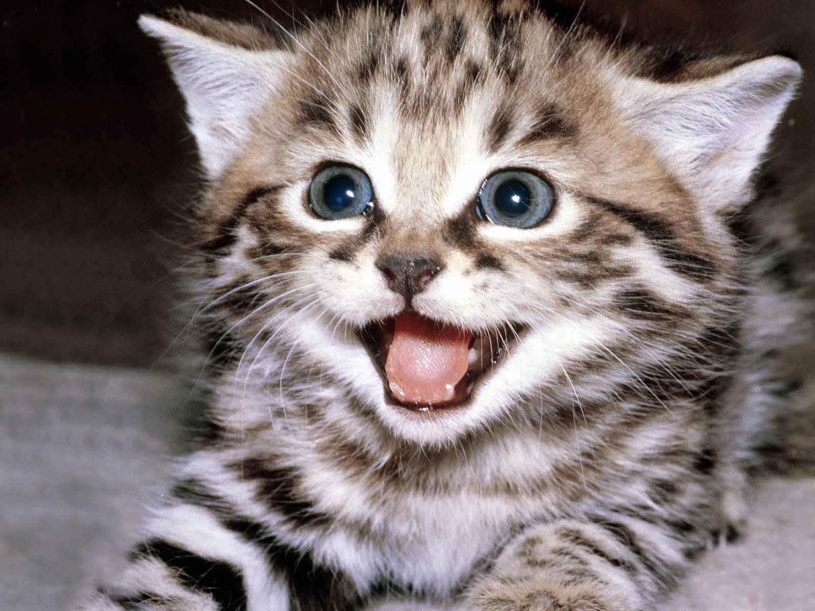 foto hewan - gambar kucing yg lucu
