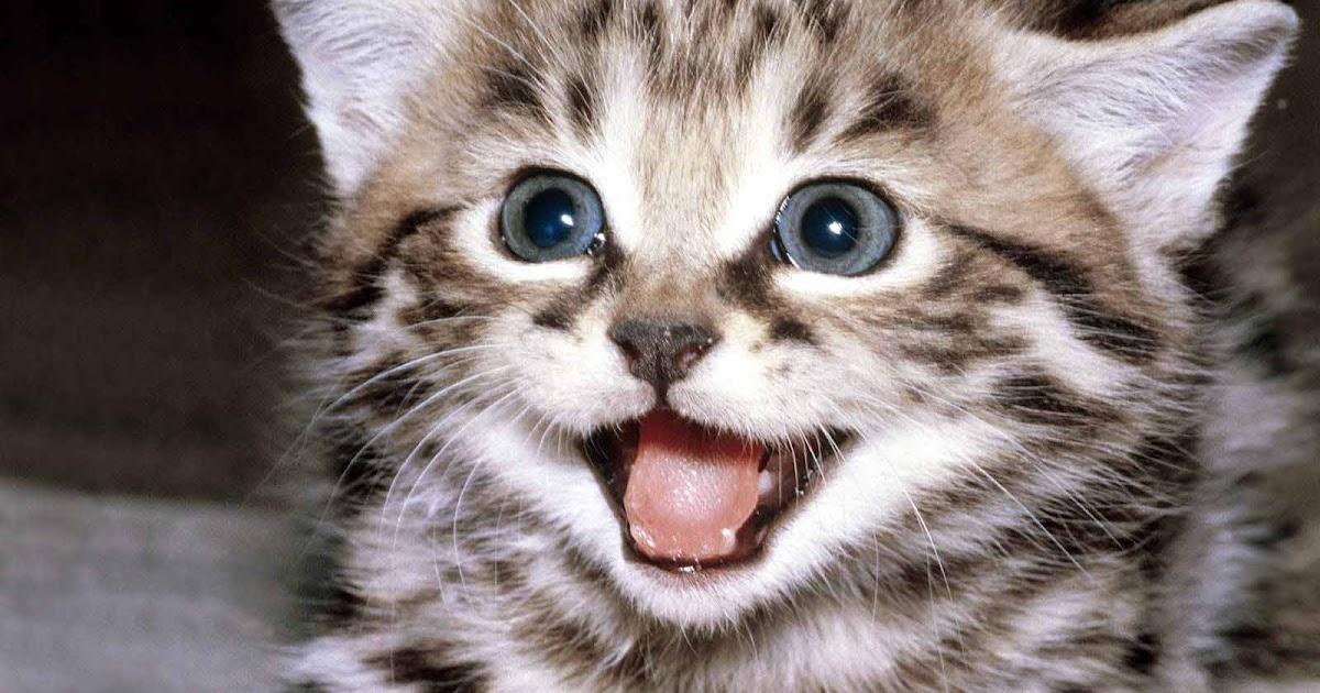 Ivanildosantos Gambar Kartun Kucing Lucu