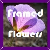 http://ginginis.blogspot.nl/search/label/BOM%20Framed%20Flowers%202014