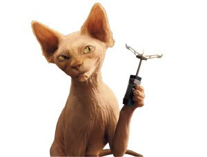 sphynx cat pic