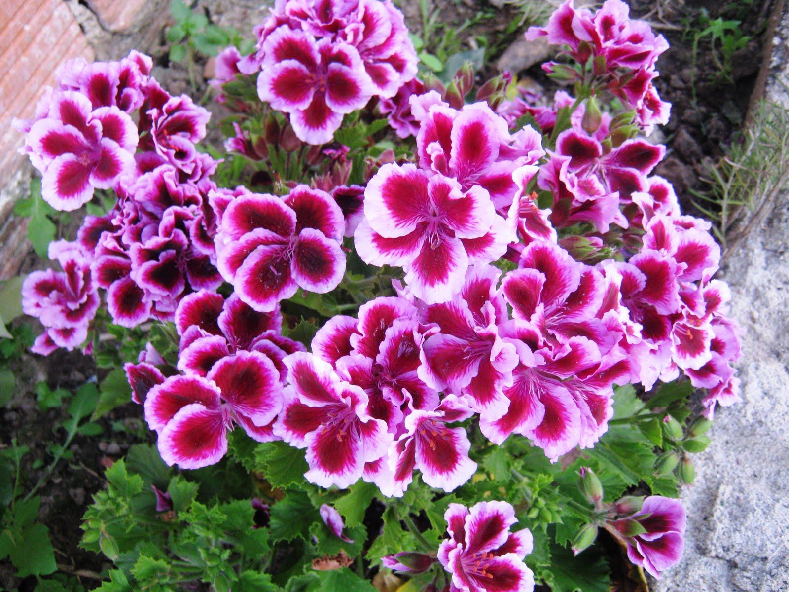 meu quintal meu jardim : meu quintal meu jardim: ARBUSTOS E CULTURAS. NO MEU JARDIM E QUINTAL EM ATALAIA