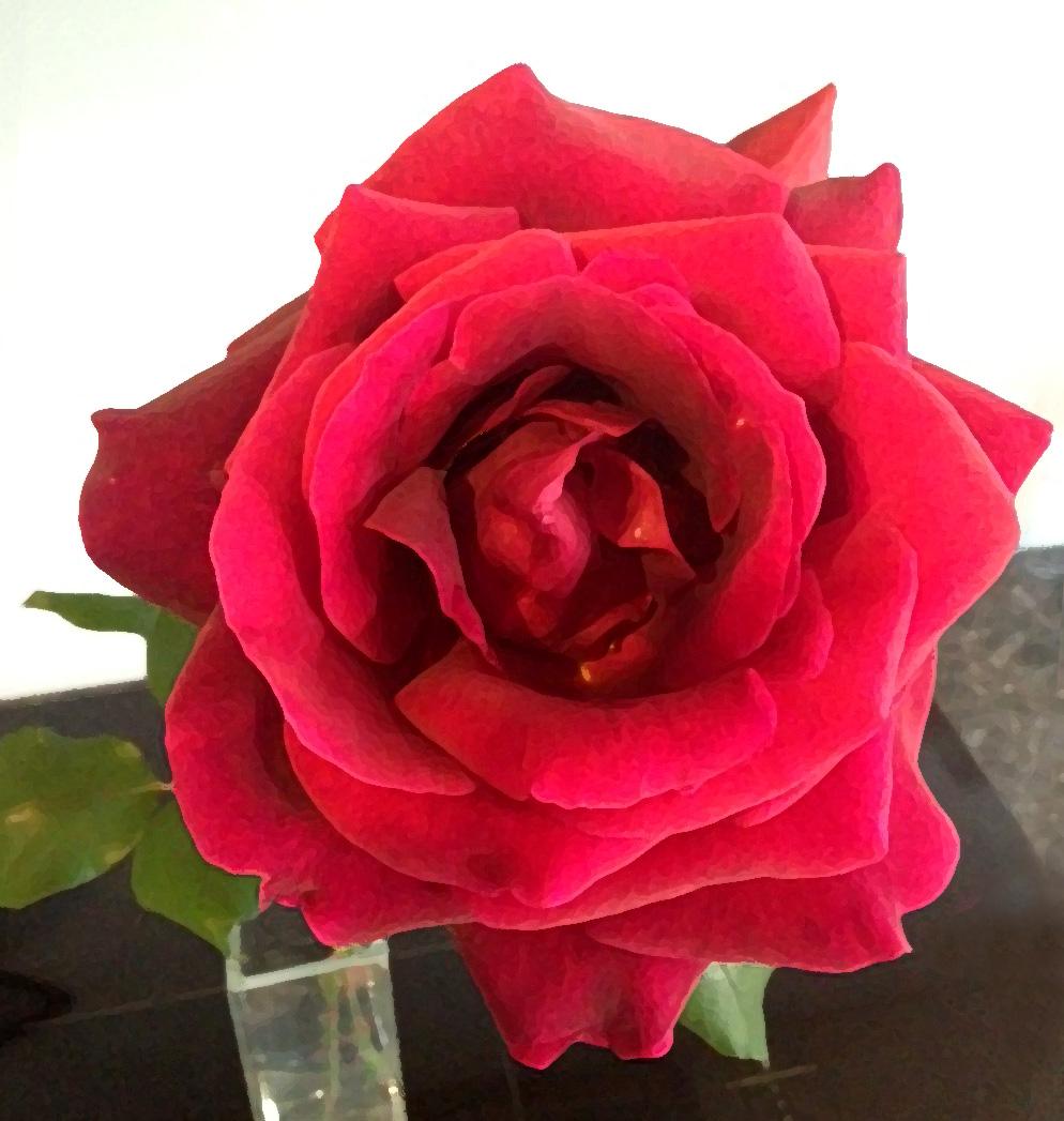 flowers by friends rose by sophie. Black Bedroom Furniture Sets. Home Design Ideas