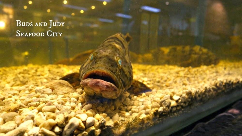Seafood City. Seafood Restaurant in Cebu City, lapulapu fish