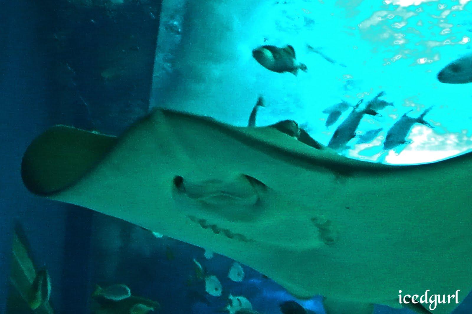 http://4.bp.blogspot.com/-P7tvPhQFhow/Tao4Ms6p__I/AAAAAAAAAfU/0TDqjC9jo-E/s1600/stingray.jpg