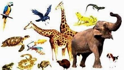 Pengertian dan Ciri Hewan Vertebrata