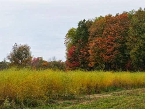 asparagus field in fall
