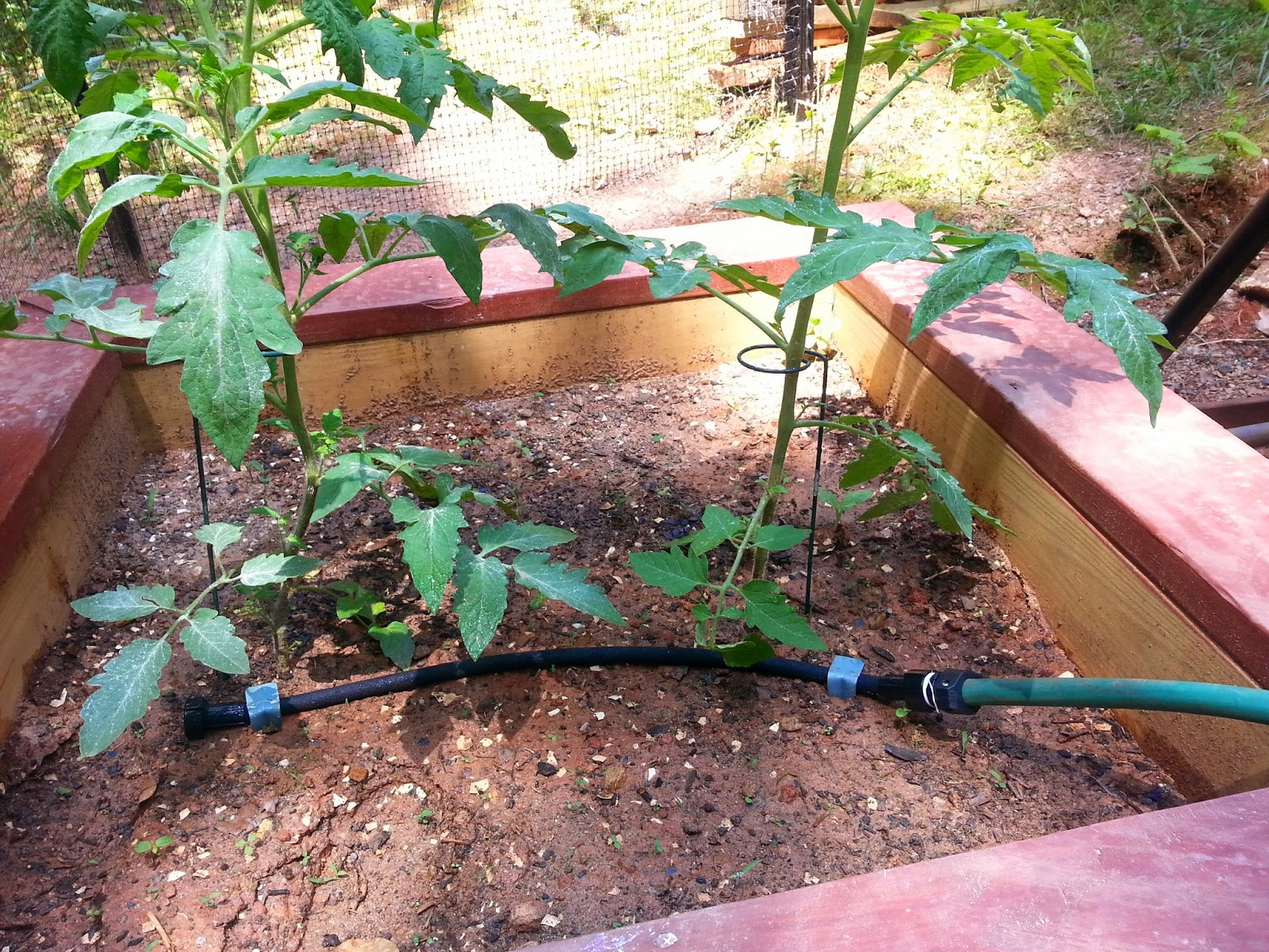 drip system in raised bed organic garden
