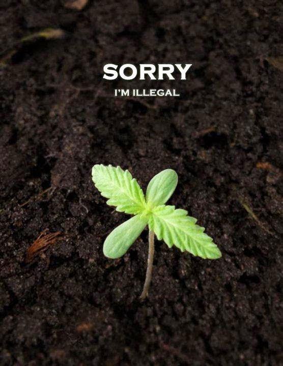 Culpar o usuário de #maconha é um raciocínio estúpido. As pessoas que fumam maconha compram-na de traficantes porque é proibido, no Brasil, plantar uma planta.