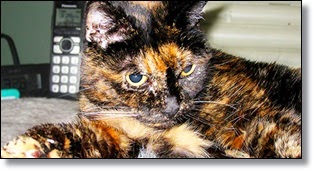 Oldest living cat picture