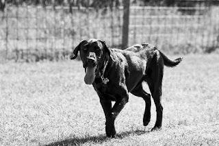 Σκύλος ταξίδεψε μόνος 800 χιλιόμετρα για να επιστρέψει στον ιδιοκτήτη του.