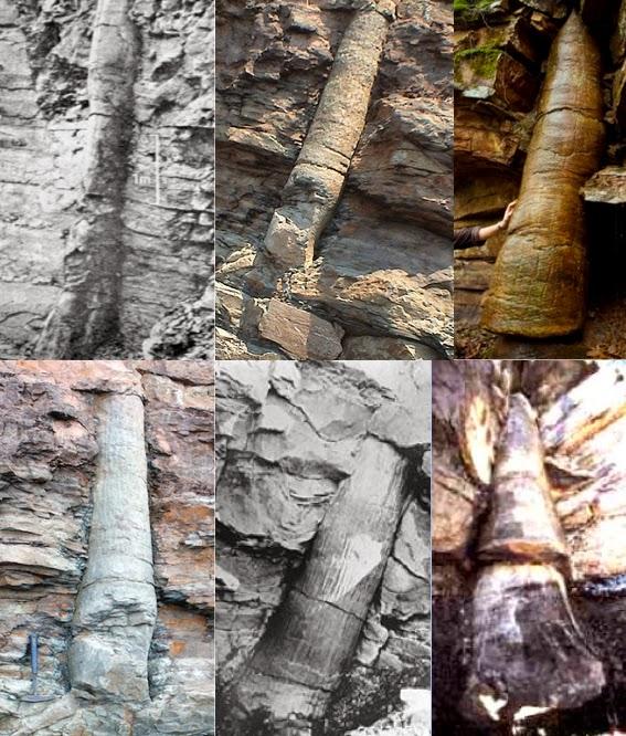 http://4.bp.blogspot.com/-P9Bw-rpe_Lo/VSK1mrwPwhI/AAAAAAAARMg/y8zTU0gTV6c/s1600/090B-Image%2BFossilezed%2BTrees.jpg