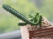 http://finfingarden.blogspot.com/2014/12/huernia-cactus-cacti-nature-wildlife.html
