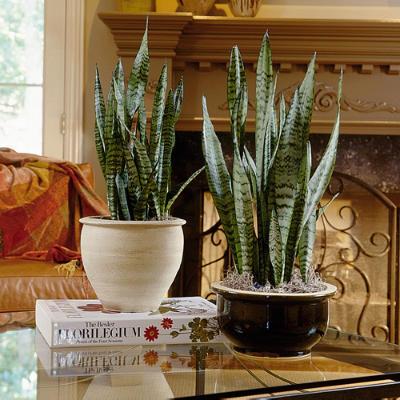 succulent plants foolproof gardening amanda jane brown. Black Bedroom Furniture Sets. Home Design Ideas