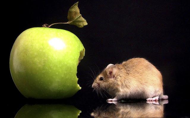 Best Jungle Life green apple, apple wallpaper, mouse wallpaper