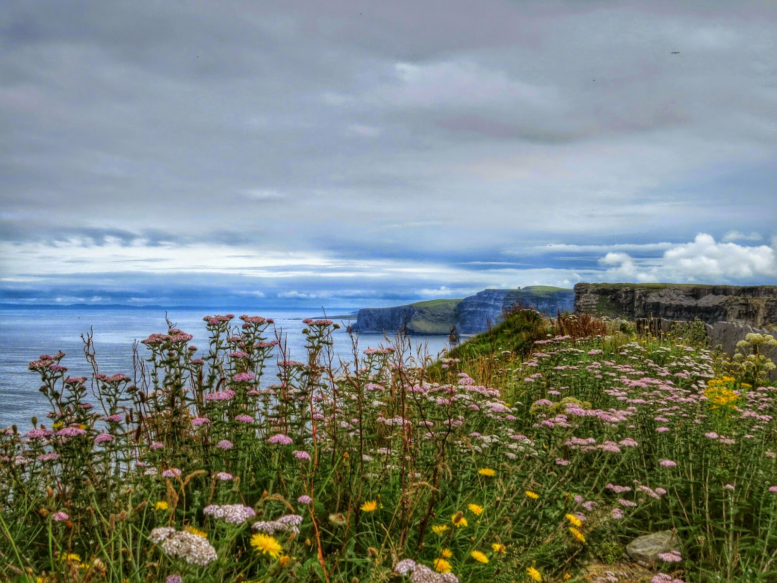 Cliffs of Moher Wildflowers