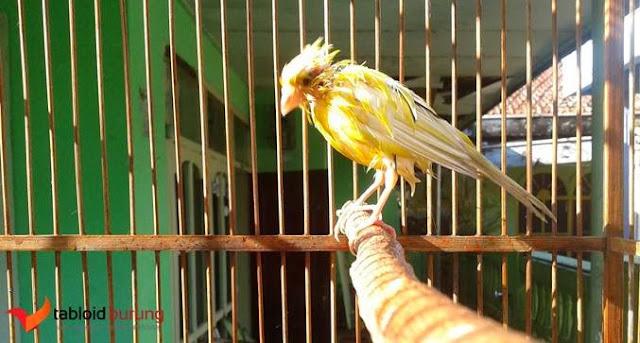 cara mengobati kutu burung