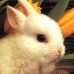 Tips to Recognize Symptoms of Pain in Rabbits and Handling Method