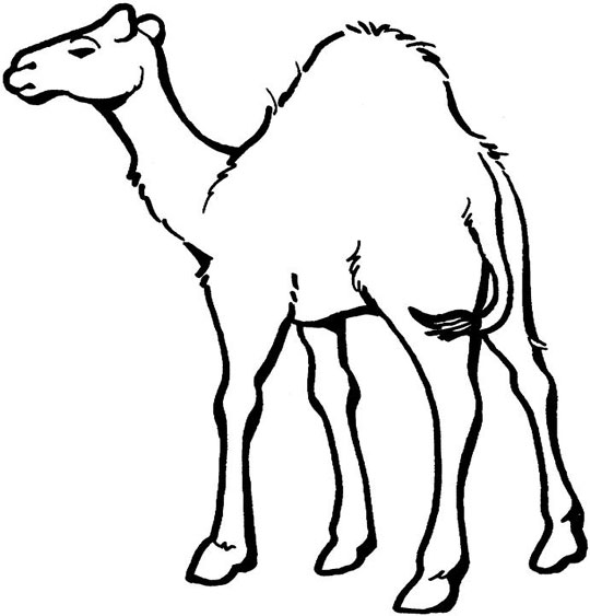Camel Coloring Sheet Education For Free Camel Colouring Page
