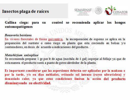 En tamaulipas la damiana hierba del venado o venadita for Viveros forestales conafor