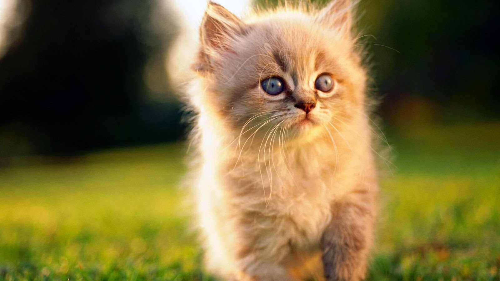Animal Cat Billi Mausi HD wallpaper