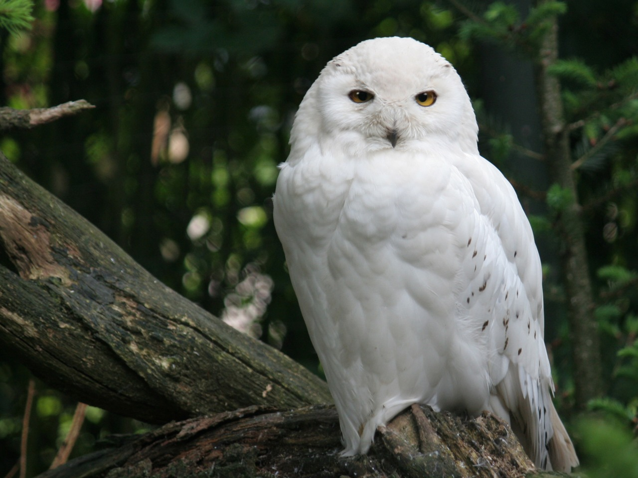 Fuentes de Información - Animales blancos