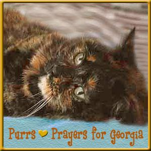 Sweet Georgia needs your purrs
