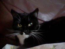meera my cat