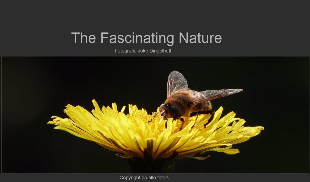 Fotoboek Natuur