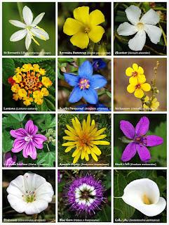 http://en.wikipedia.org/wiki/Flower