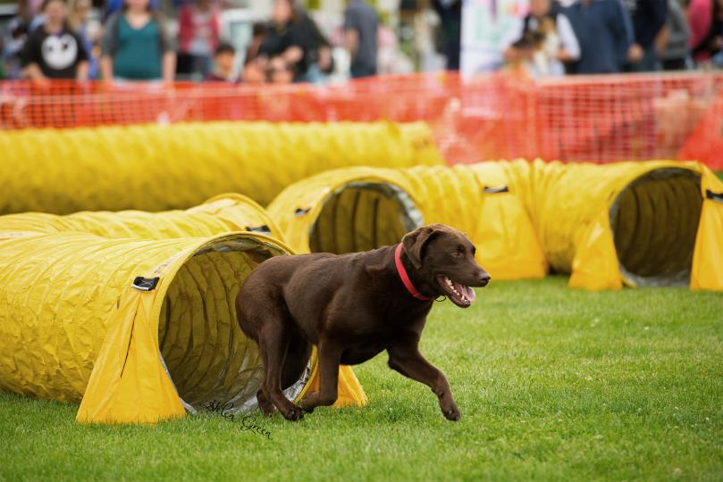 Big-Day-Out-for-Dogs-Agility-Course