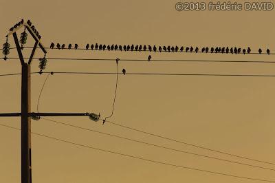 silhouettes oiseaux sépia contraste Seine-et-Marne