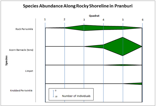 Nattys mind boggling biology blog according to the kite diagram pertaining to the data collected the abundance of acorn barnacles limpets knobbed periwinkles and the abundance of rock ccuart Images