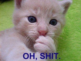 Cat Gets Worried