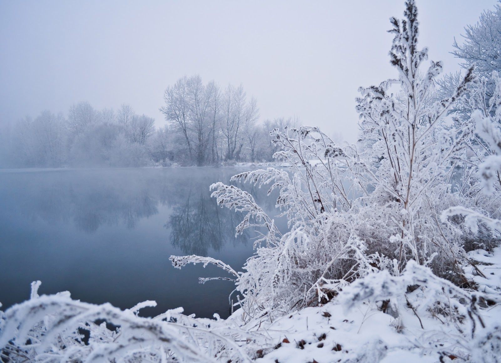 Winter fog Wallpapers