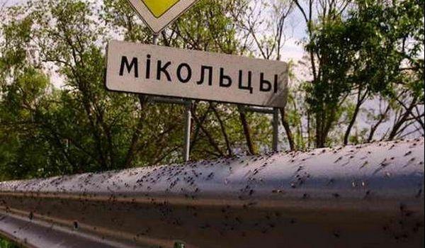 Millones de mosquitos