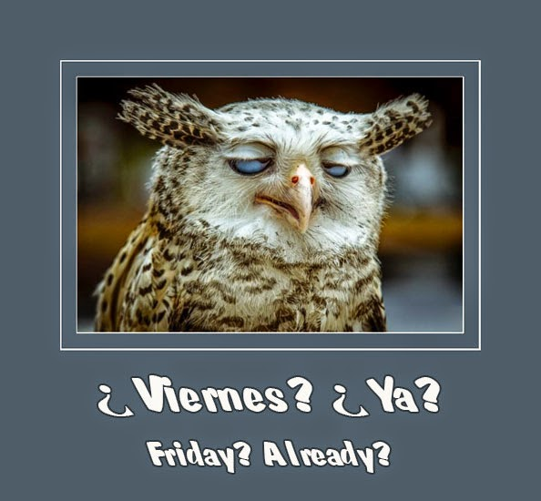drunk-owl