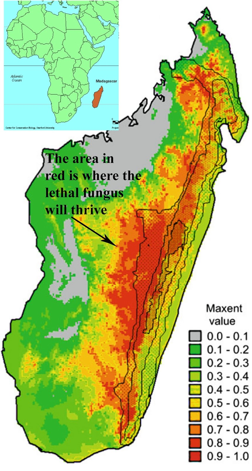 Frog Probiotics Madagascar - Where is madagascar