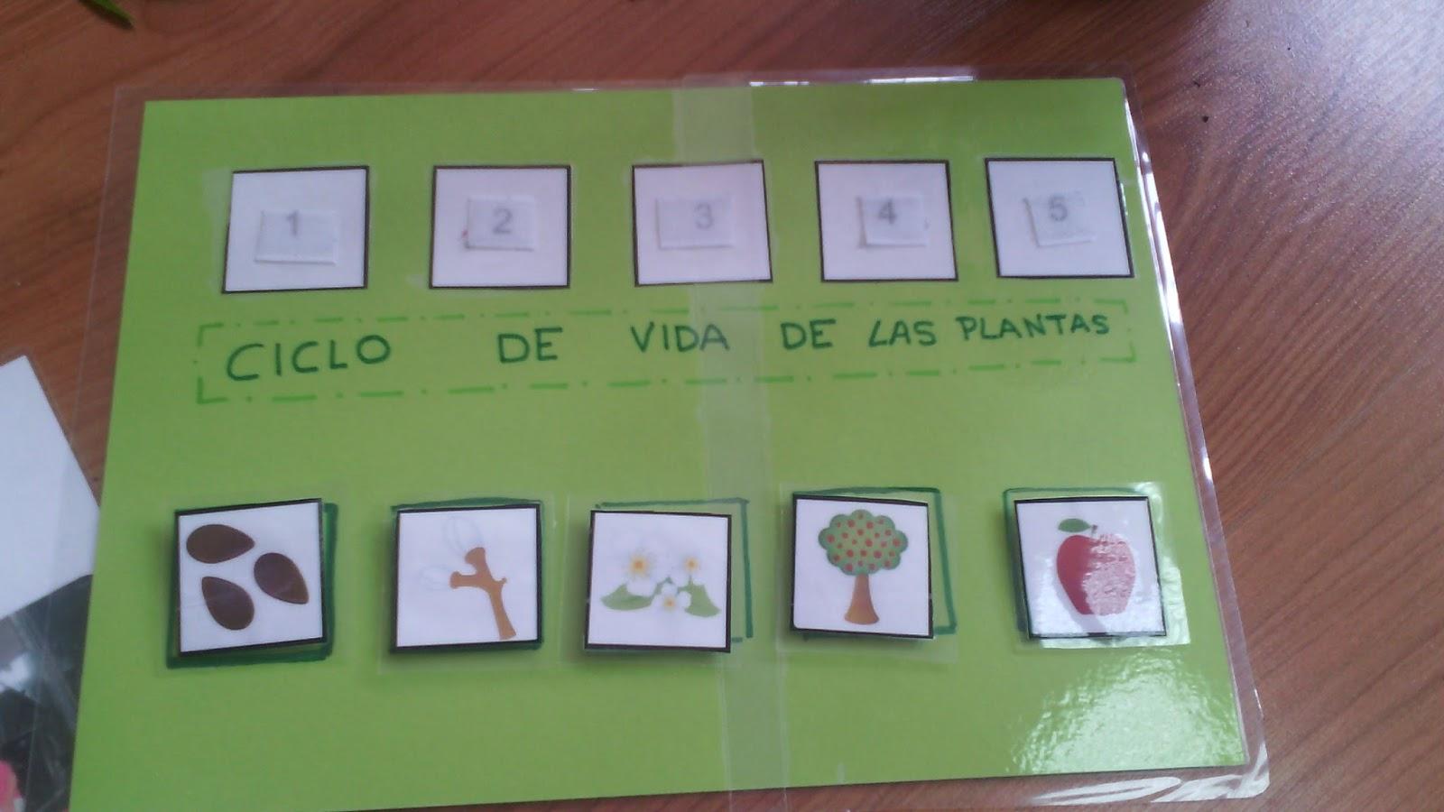 Actividades para el primer ciclo de educaci n infantil for Plantas beneficiosas para el huerto