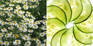 Mask of cucumber and chamomile