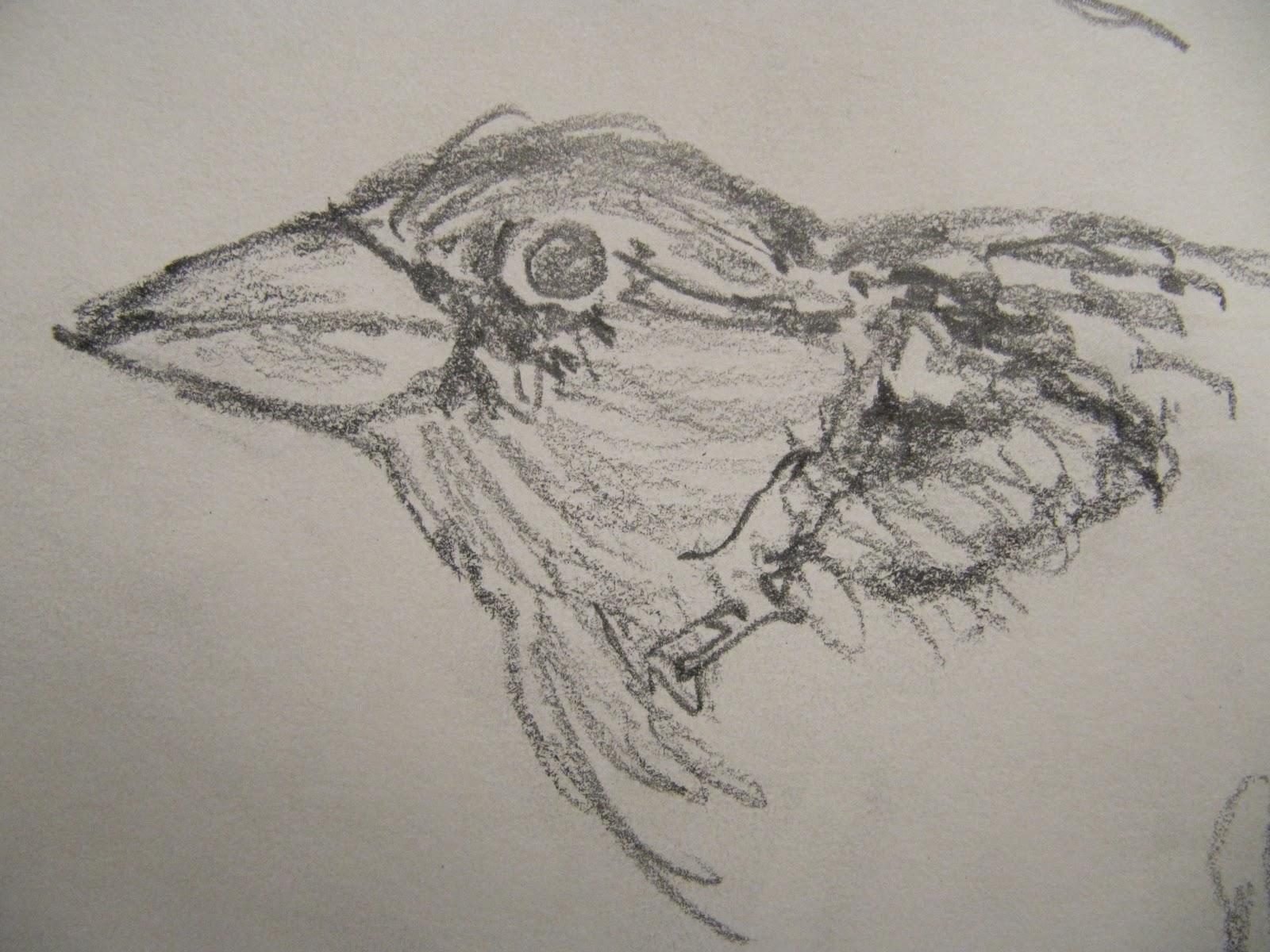 tegninger papir fugl