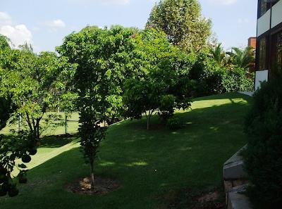 Blogue Jardim