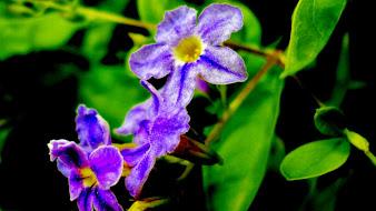 #10 Greatest Flowers Wallpaper HD