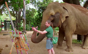 The Painting Elephant: Tricia Creates $1000 Artwork With Her Trunk