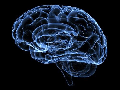 脳の法則を知っていますか?