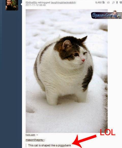 funny fat cat humor