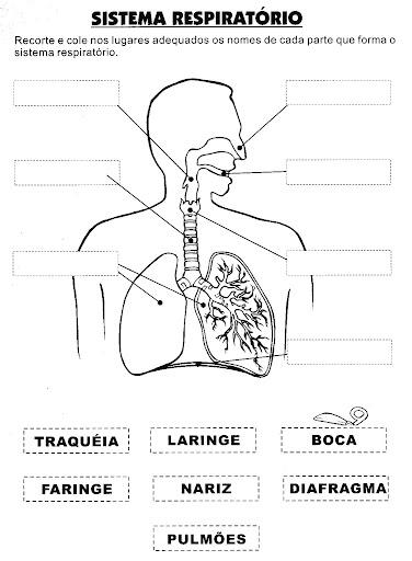 Atividades Sobre O Corpo Humano   Parte 1