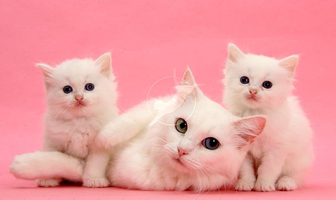 Kucing - Binatang Bers...