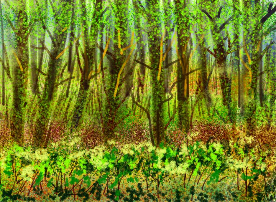 Yumurcak Tv  Konuşan Orman Oyunları