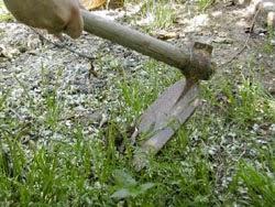 Si quieres tener un jardín libre de malas hierbas, toma nota de los siguientes consejos
